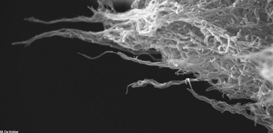Carbon Nanotube Shore s