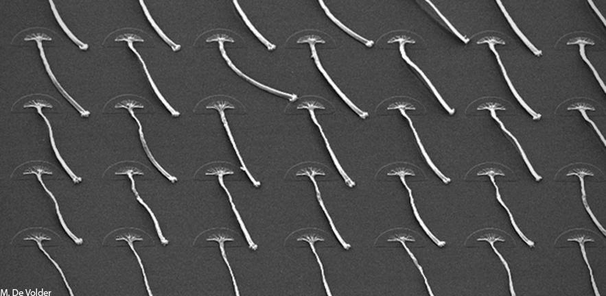 Carbon Nanotube   Graphene Composite