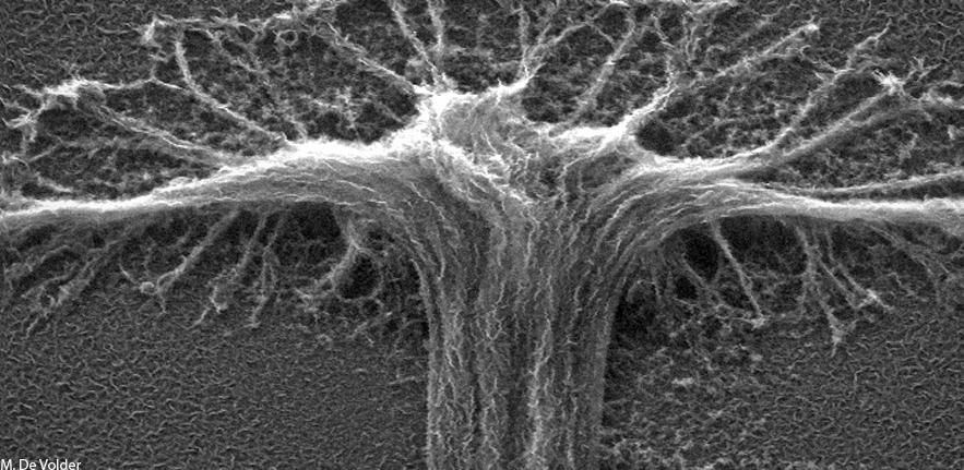 Carbon Nanotubes Coated with Graphene
