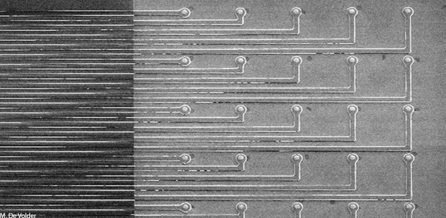 Graphene Sensor Array